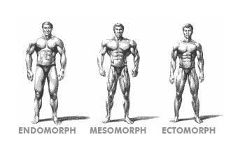 endomorph-ectomorph-mesomorph-somatotypes.jpg